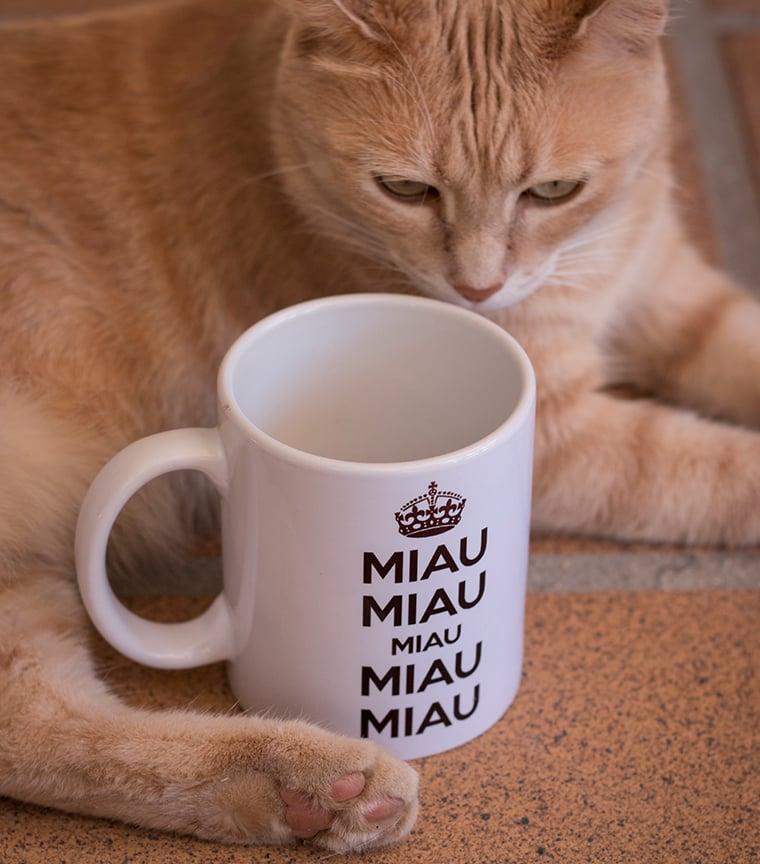 Taza Miau Miau